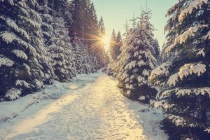 Millions of Christmas trees expected for landfill after this year's festive period